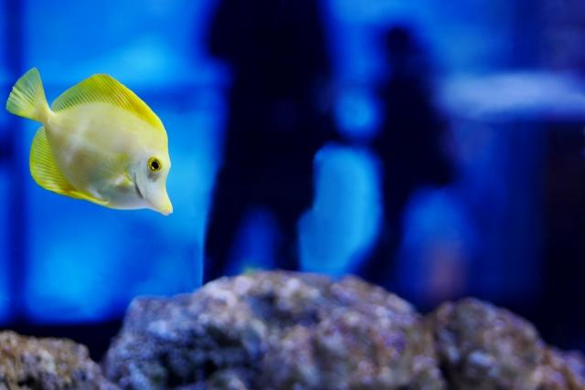 水族館内の魚