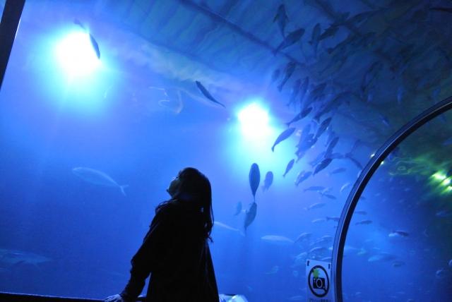 水族館デート中の女性