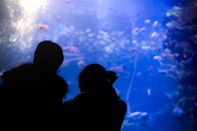水族館デートの良いところ
